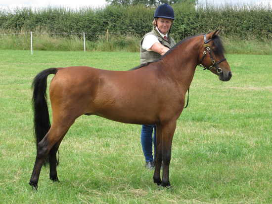 Learn About Which Horse Breeds Are The Oldest In The World